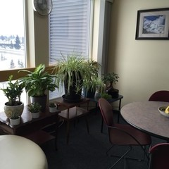 Plants sitting by window of apartment living room.
