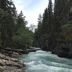 Rushing river among evergreen trees