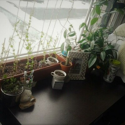 Many plants sitting near the window of a residence room