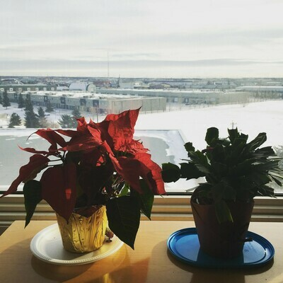 Poinsettia and cactus sitting by the window.