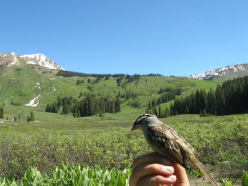 Birding in a typical alpine meadow habitat