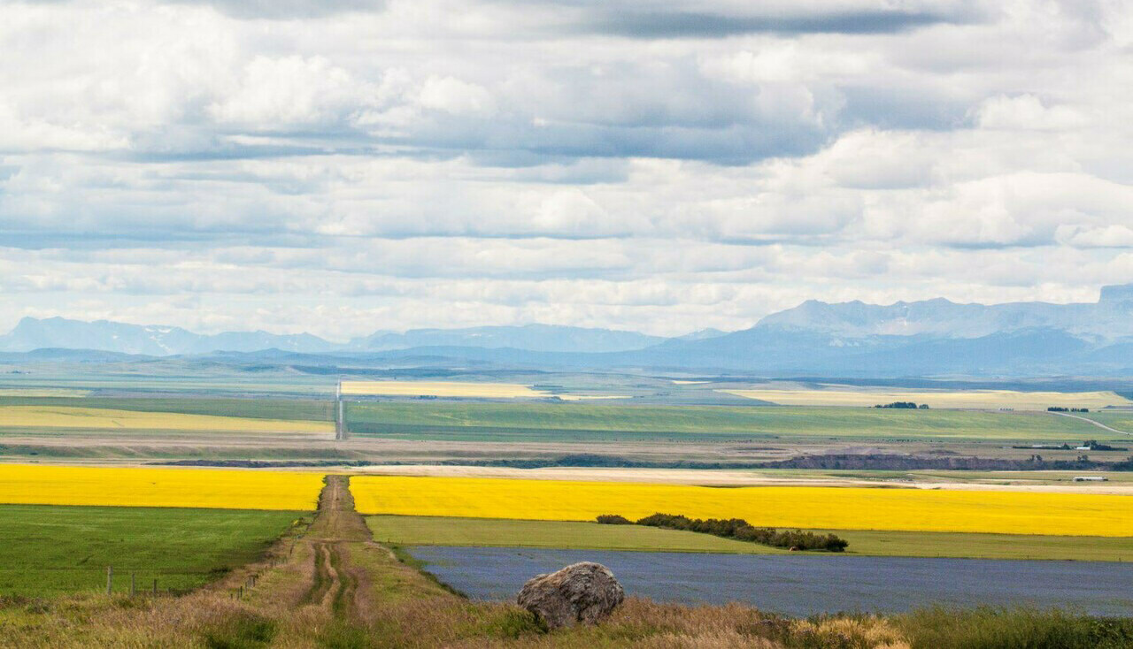 Alberta canola field, photo credit: Daniel Krol, research student at the King's Centre for Visualization in Science