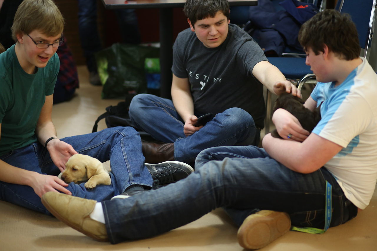 Students enjoying a puppy therapy event