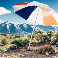 Tips to Beat the Heat for You & Your Pet